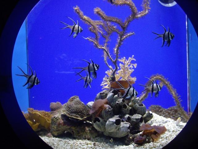 Ozeanographisches Museum Monaco_1