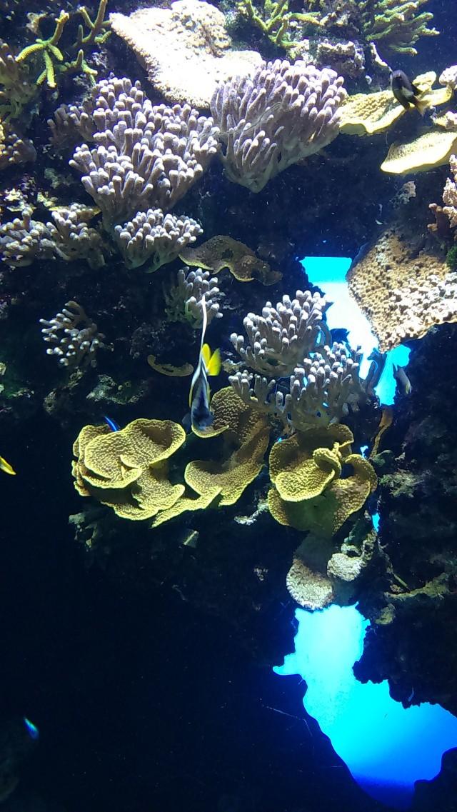 Ozeanographisches Museum Monaco_6