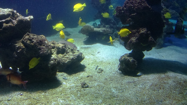 Ozeanographisches Museum Monaco_8